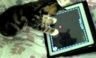 Kompiuterinis žaidimas katėms
