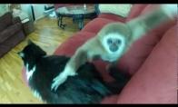 Beždžionėlės ir katės draugystė
