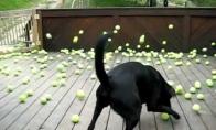 Išpildyta šuns svajonė