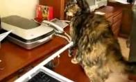 Žiauriai nervuotas katinas