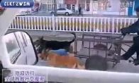 Keturių šuns jėgų mašina