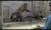Šūstra ir protinga beždžionėlė