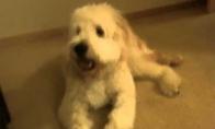 Šuo pamiršta kad reikia pašokti ir... Bum