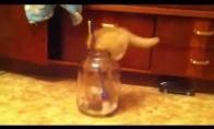 Katinas prieš stiklainį