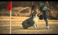 Žiopliausias šuo pasaulyje