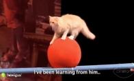 Rusijos cirko katės