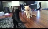 Katė nindzė