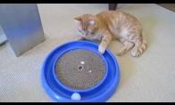 Geriausias žaislas katėms
