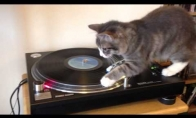 DJ Katinas įvaldė judesiuką