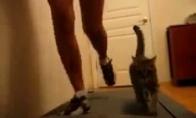 Mergina ir jos katė ant bėgimo takelio