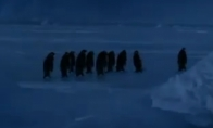 Kaip griūna pingvinai