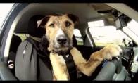 Pirmasis pasaulyje vairuojantis šuo