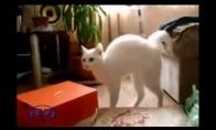 Juokingų kačių rinkinukas