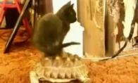 Tingiausias katinas pasaulyje