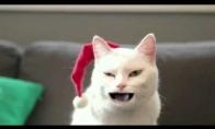 Šventines dainas dainuojantis katinas