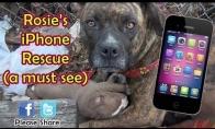 Kaip telefonas išgelbėjo penkių šunų gyvybes