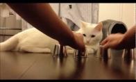 Katino tu lengvai neapgausi