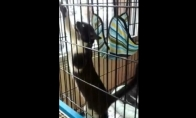 Katė akrobatė ir hamakas
