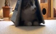 Dėžės jau atsibodo - dabar katėm reikia laikraščių
