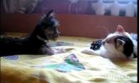 Grąžink mano žaislą!