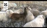 Elniukas mano, kad jis yra avis