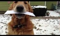 Šuo paštininkas