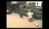 Kaip šuo dėmesio gauti bandė