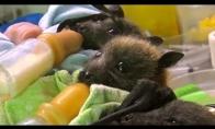 Šikšnosparniukų prieglauda