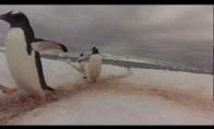 Pingvinų sankryža Antarktidoje
