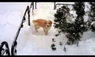 Per daug sniego šunėkui