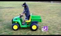 Vairuojantis šuo