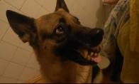 Neapsisprendėlis šuo