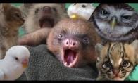Mieliausi pasaulio gyvūnai