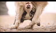 Paklusnus šunėkas