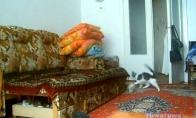 Epiškos katės ir triušio gaudynės