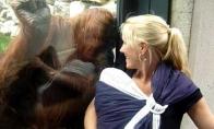 Orangutangas sutinka vaikį