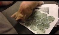 Katę suintrigavo optinė iliuzija