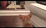 Šunėkas prieš veidrodį