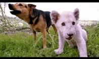 Geriausi draugeliai - šuo ir liūtukas