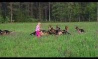 Mergaitė ir jos vokiečių aviganiai