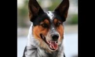 Kietai kietas šunėkas