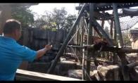 Pasižaidimai su orangutangu