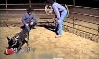 Paklusniausias šuo pasaulyje