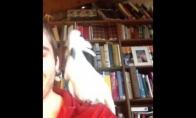 Paukštiškas šokis