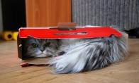 Sraiginė katė