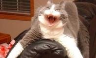 Simo katė