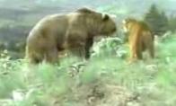 Meška Vs Puma
