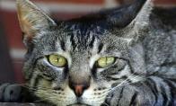 Katė be nuomonės