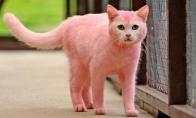 Katė Pinkis