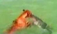 Šuo VS Ryklys